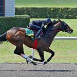 A second Kentucky Derby horse has local ties