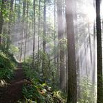 Oregon forests get $700K+ in grants as restoration efforts take hold