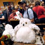 From Potter to Sharknado: LeakyCon fosters fan culture and growth