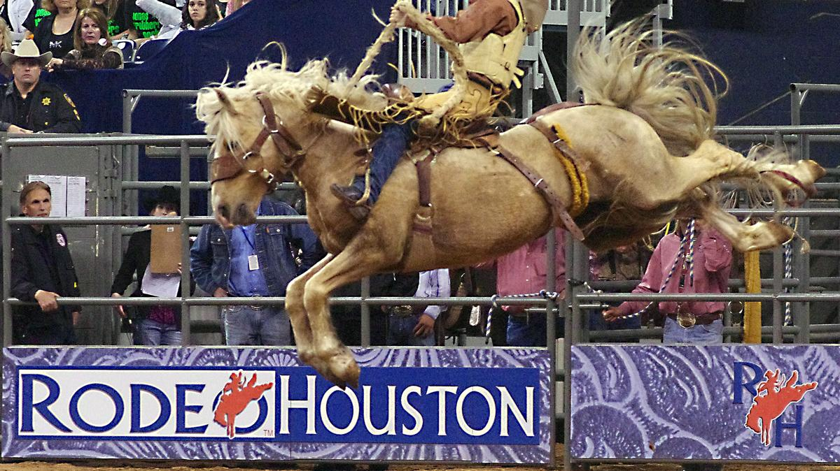Houston Livestock Show And Rodeo 2020.Houston Livestock Show And Rodeo Reveals Education