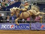 Rodeo Houston total attendance, livestock auctions break records