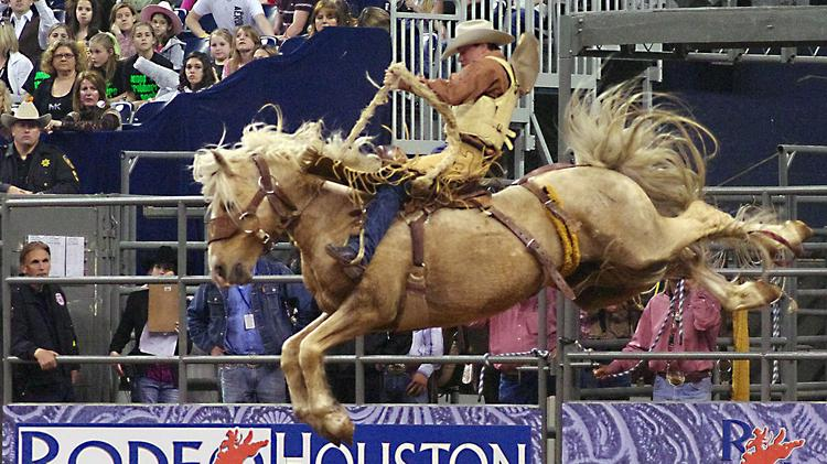 Houston Livestock Show 2020.Houston Livestock Show And Rodeo Reveals Education