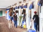Churchill Downs backside is starting to buzz with Derby activity