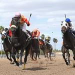 Brothers battling over Turf Paradise