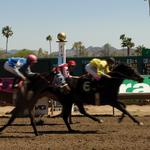 Turf Paradise seeing bigger crowds at the track