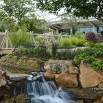 How the Dallas Arboretum has blossomed into $170M economic rose