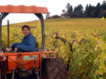 A wine maker's take on Oregon's crazy low-snow weather
