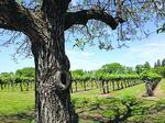 California wine sales surge in 2014