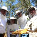 The trouble with bees (Video)