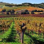 Wine app startup Delectable scores $3 million