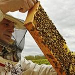 <strong>Harvey</strong> Mackay: What bees tell us about making better decisions