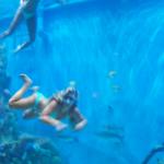 'Tanked' stars showcase aquarium at Guy Harvey's RumFish