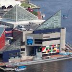 Locals are feeling the heat — but Baltimore's aquarium isn't