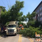 Five things to start your day: TGI Fridays sale and when a tree falls in South Tampa