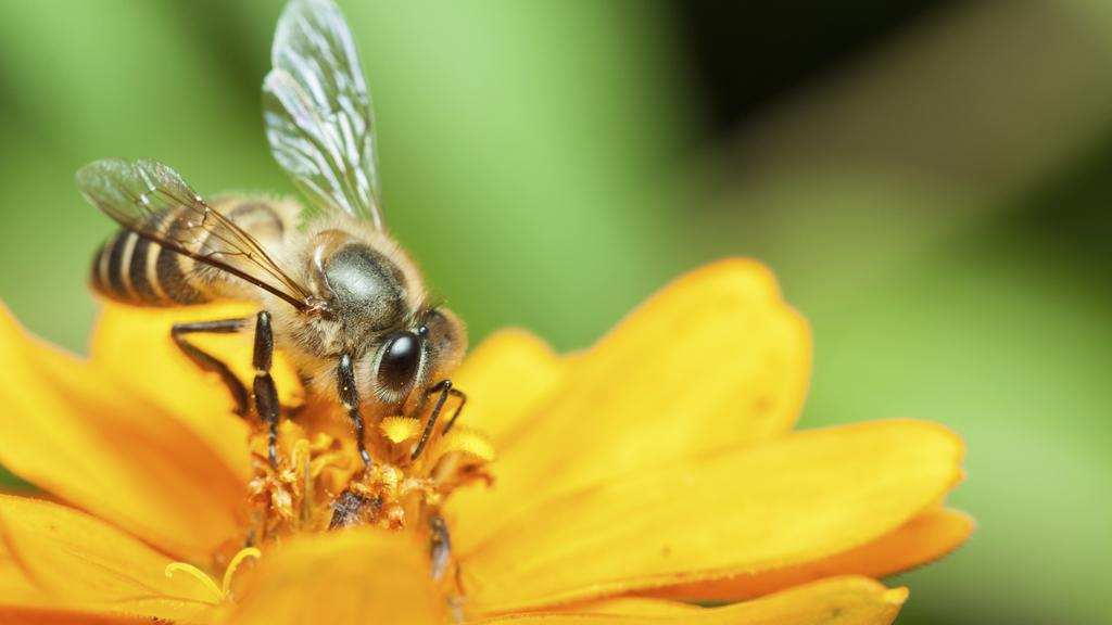 Kentucky-based beekeeping firm is being sold to a Minnesota company