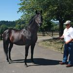 As California Chrome chases Triple Crown, '96 Derby winner Grindstone chills in Oregon (Photos)