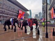 Elephants were on hand Thursday at the American Airlines Center to greet site selectors from the Republican Party.