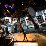 N.C. Museum of Natural Science takes the stage in global science community