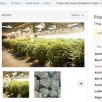 Sparking a connection: The eBay of pot connects growers with retailers