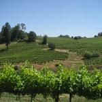 Hundreds of vineyard acres for sale in Nevada County