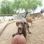 Doggie Dog World: Livin' the life at Pawderosa Ranch Doggie Play and Stay