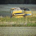 State Agriculture Department proposes many hoops for hemp farmers