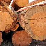 Climate hub tool could push Southeast's timber industry forward