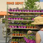 Study: Home Depot plants contain pesticide linked to honeybee deaths