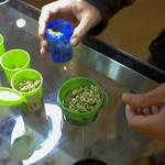 Up To Speed: Washington state stumbling through launch of legal pot