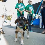 Feasting for Fido raises funds for Humane Society: Slideshow