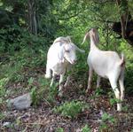 Triad farm buys 167+ acres to grow livestock business
