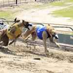 Southland Park becoming the top dog for gambling