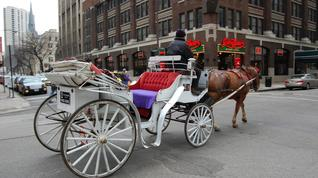 Do you think horse-drawn carriage rides should be offered in certain districts of Birmingham?