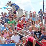 New at the Minnesota State Fair: West End Market, stunt dogs, horse dancing