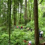 Portland voters to decide fate of parks funding