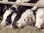 Cargill lands animal-feed deal that fell apart for Land O'Lakes