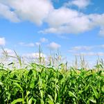 Novozymes picks UC Davis for its first U.S. research conference