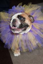 SLIDESHOW: Doggies on the Catwalk