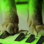 Are you ready?: Meow Mix jingle steps out on the dance floor