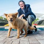 Pets and philanthropy go hand in hand for Pet Paradise