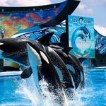 SeaWorld announces operational management changes