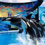 SeaWorld sued by Orange County Property Appraiser