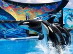 Chinese company buys Blackstone's equity interest in SeaWorld Entertainment