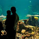 National Aquarium generates $455 million for city and state, report finds
