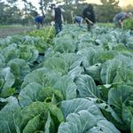 Innova selected for federal agricultural initiative