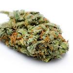 C. Fla. nursery with medical marijuana hopes headed to foreclosure auction