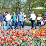 Flower Power: Dallas Arboretum makes $105M economic impact