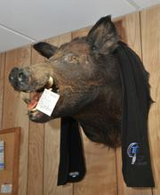 The office decor at CTM Corp., a subcontractor for Remington Arms. This taxidermied boar was hunted by the shop-floor manager on a private farm in South Carolina.