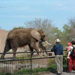 GLMV brings country's best zoo designers to Wichita