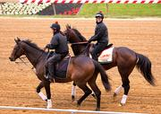 Kentucky Derby winner Orb, rear, takes the track for a practice lap Wednesday morning at Pimlico.